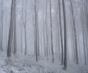 snow, forest, and trees image