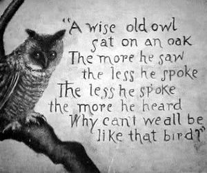 owl, bird, and quote image