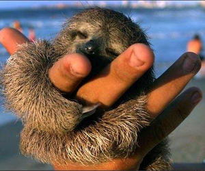 cute, sloth, and animal image