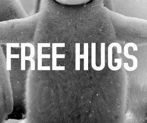 hug, penguin, and free image