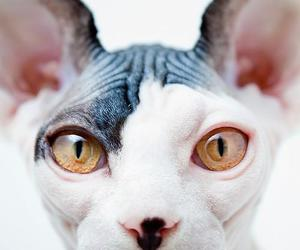 amazing, cat, and cats image