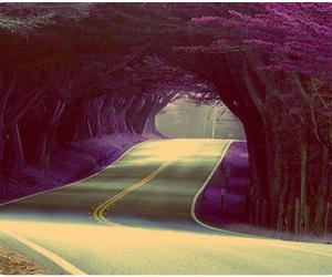 road, tree, and purple image