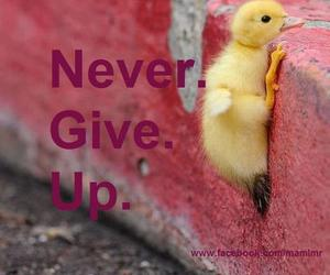 never, quotes, and never give up image