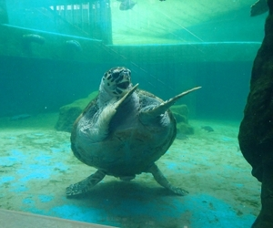 turtle, funny, and dance image