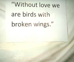 birds, wing, and love image