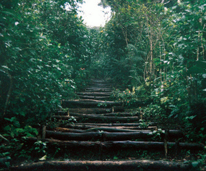 forest, nature, and path image