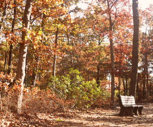 alone, autumn, and bench image