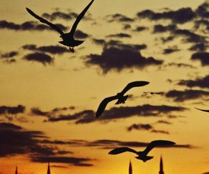 awesome, sky, and birds image