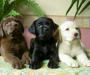 dog, puppy, and pet image