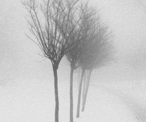 black and white, snow, and trees image