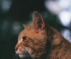 cat, dubtrackfm, and vintage image