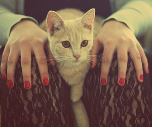 cat, nails, and red image