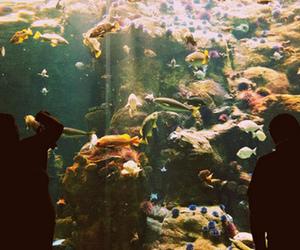 fish, vintage, and aquarium image