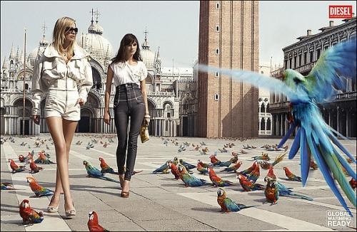 bird, diesel, and fashion image