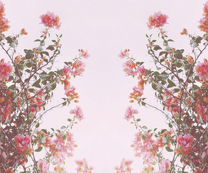 floral, photography, and pretty image