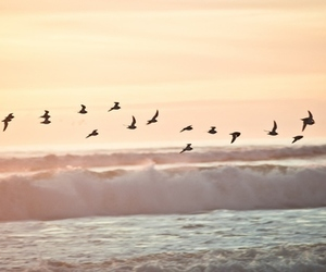bird, beach, and sea image