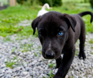 dog, photography, and puppy image