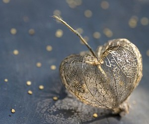 heart and gold image