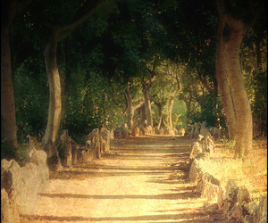 path, sunlight, and trees image