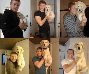 dog, puppy, and friends image