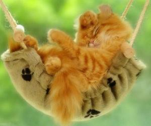 cat, kitten, and sleeping image