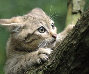 cats, cute animals, and kitten image