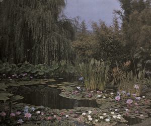fantasy, photo nature, and water lily garden image