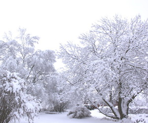 beautiful, snow, and trees image