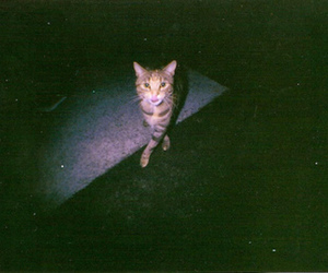 cat, photography, and dark image
