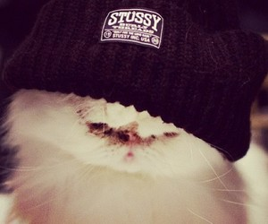 cat, cute, and stussy image