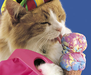 cat and ice cream image