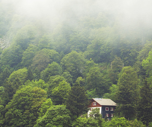 forest, tree, and house image