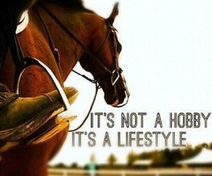 horse, lifestyle, and hobby image