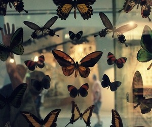 animal, buterfly, and butterfly image