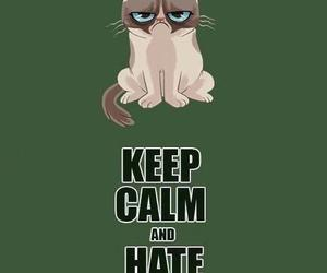 keep calm, hate, and cat image