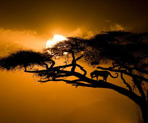 sunset, africa, and cat image