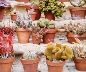 cactus, garden, and plant image