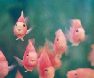 fish, pink, and water image