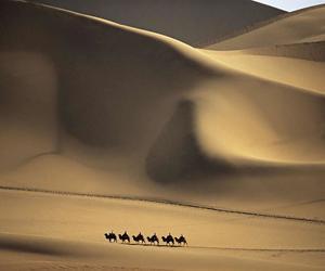 camelos image