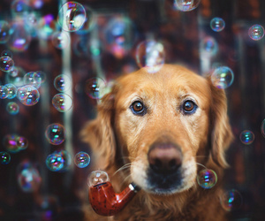bubbles, dog, and pipe image