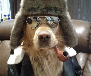 dog, funny, and cool image
