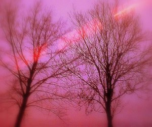 lovely, nature, and pink image