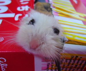 hamster, pocky, and cute image