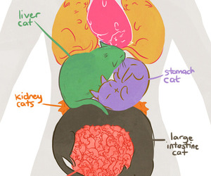 cat, body, and heart image