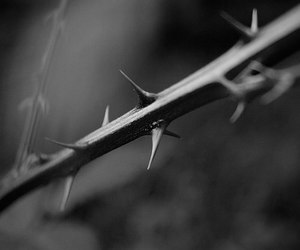 dark, photography, and thorn image