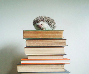 book, cute, and animal image