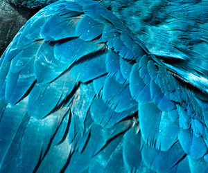 bird, parrot, and blue image