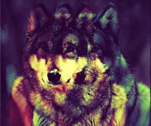 wolf, colors, and indie image
