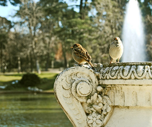 beautiful, birds, and fountain image