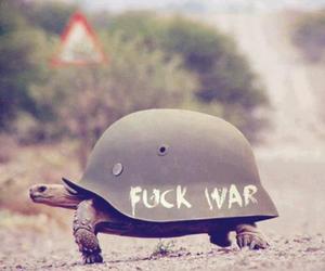 alternative, funny, and tortoise image